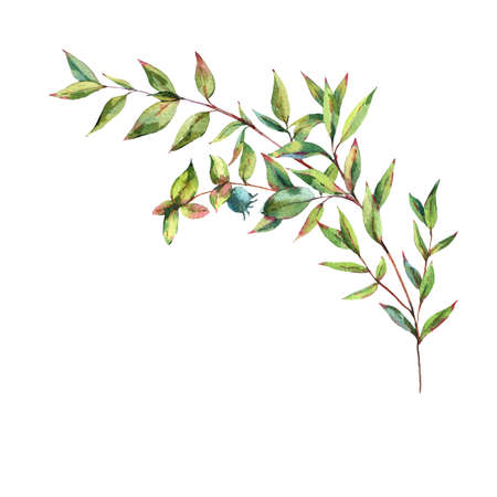 Watercolor Myrtle. Vintage Watercolor Greeting Card with Green Leaves, Twigs, Berries, Branches of Myrtle.