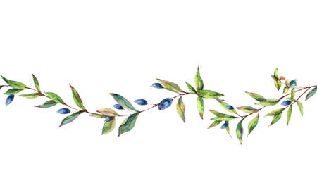 Watercolor Myrtle. Vintage Watercolor Seamless Border with Green Leaves, Twigs, Berries, Branches of Myrtle. Zdjęcie Seryjne