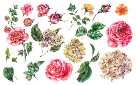 Watercolor Floral Set of Vintage Pink Roses, Hydrangea, Snail and Wild Flowers, Botanical Collection Isolated on White Background Stock Photo