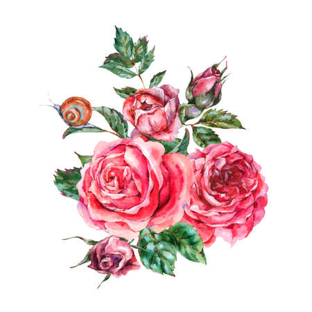 Decorative vintage watercolor red roses, Nature greeting card with flowers, leaf,  buds and snail, botanical floral illustration isolated on white background