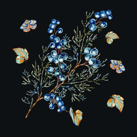 Watercolor woodland blue berries greeting card, moth and fir branches elements. Forest natural illustration isolated on black background. Banco de Imagens