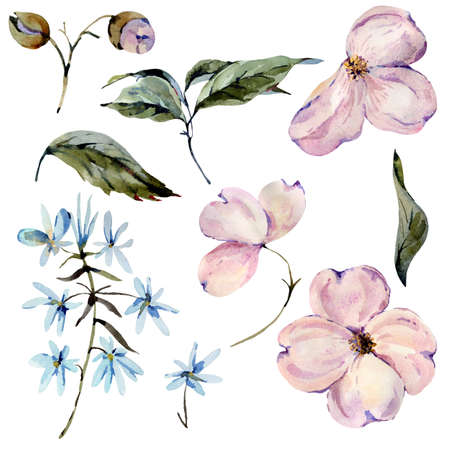 Set of watercolor pink and light blue flowers, twigs, leaves, buds. Hand painted vintage floral design elements isolated on white background. Natural collection. Banco de Imagens - 136414182