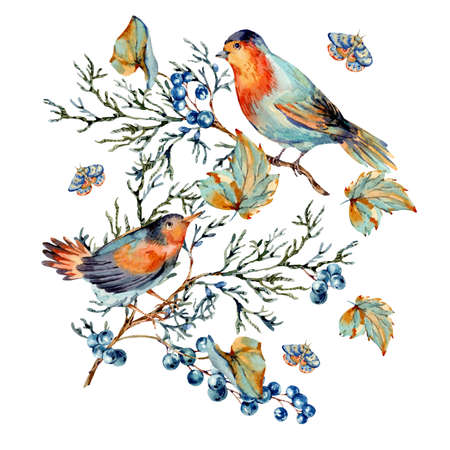 Watercolor woodland birds with blue berries, moth and fir branches. Forest natural illustration isolated on white background.