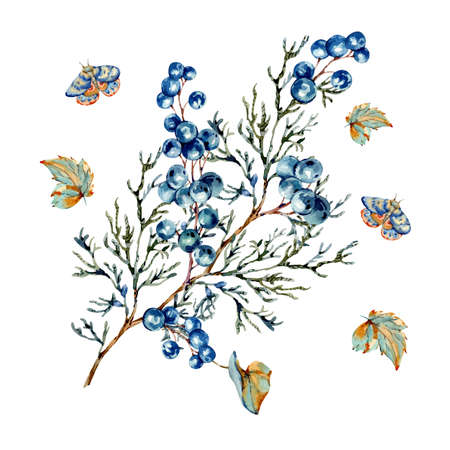 Watercolor woodland blue berries greeting card, moth and fir branches elements. Forest natural illustration isolated on white background.