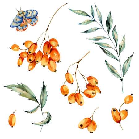 Watercolor set autumn orange berries, leaves, branch and blue moth, natural collection. Hand painted vintage floral illustration isolated on white background.