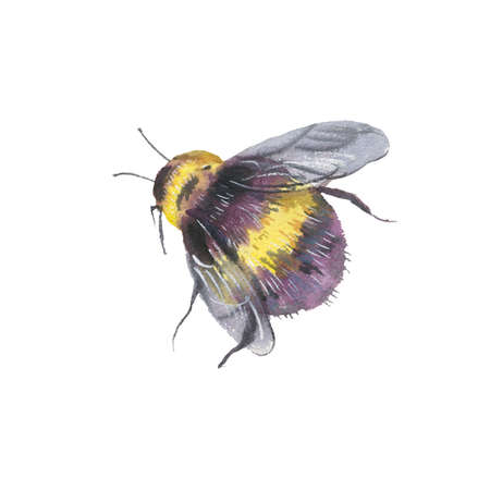 Watercolor bee natural illustration. Summer greeting card isolated on white background Banque d'images
