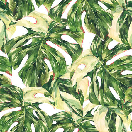 Watercolor Monstera Variegated botanical seamless pattern, tropical summer green leaves wallpaper on white background.