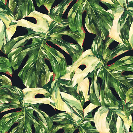 Watercolor Monstera Variegated botanical illustration, tropical summer green leaves greeting card isolated on black background.