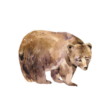 Watercolor bear isolated on white background. Forest animals illustration. Woodland creatures. Stockfoto - 159014740
