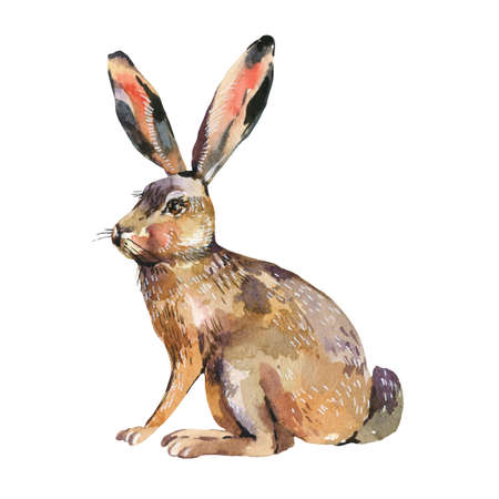 Watercolor hare isolated on white background. Forest animals illustration. Woodland creatures.