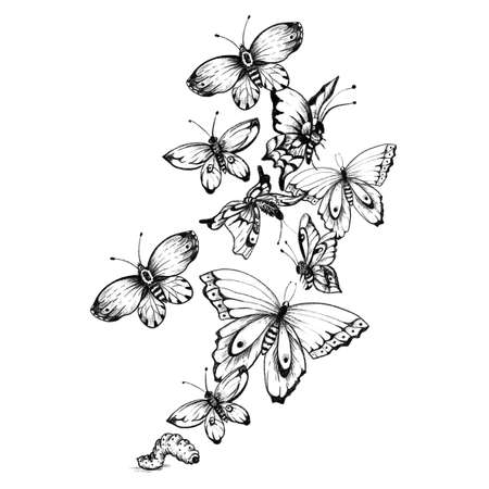 Vintage monochrome butterflies illustration. Black and white butterfly. Stockfoto