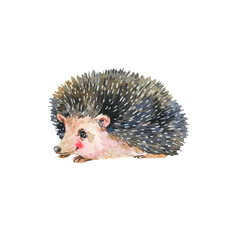 Watercolor hedgehog isolated on white background. Forest animals illustration. Woodland creatures.