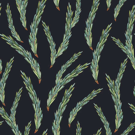 Watercolor forest fir branches seamless pattern. Natural woodland texture. Botanical wallpaper on black background Stockfoto - 159014762