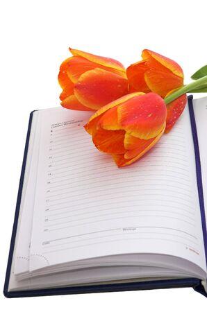 przypominać: Tulipany na notebooka - przypominają mi specjalne wydarzenia