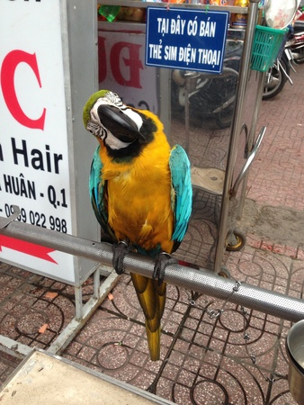 enquiring: Very friendly parrot in one of the market stalls in Shanghai