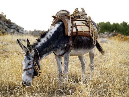 donkey with saddle Stock Photo - 459251
