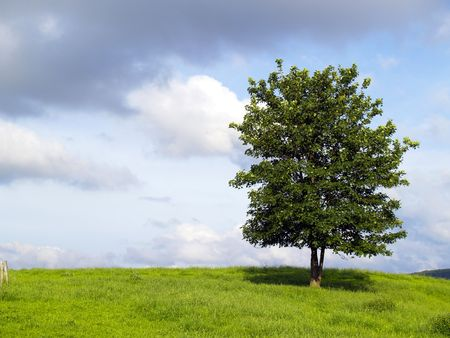 lonely tree on a feedlot Stock Photo