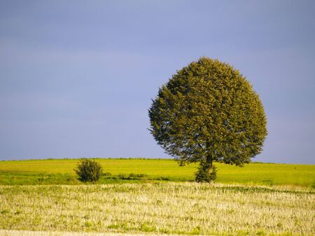 tree and bush between harvested fields