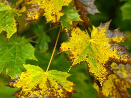 autumnally: wet autumnal foliage on a rainy day