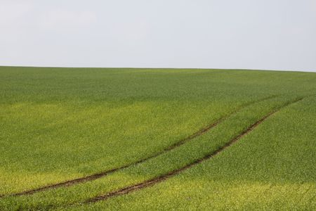 tractor tracks between young wheat seedlings in a field photo