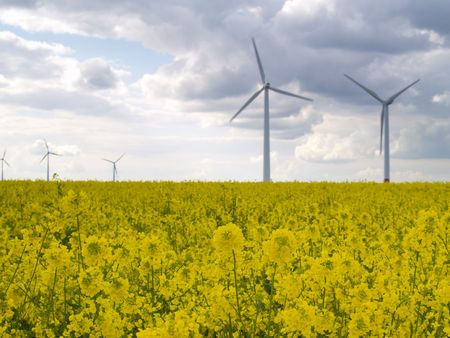 wind power plants in canola field with dark clouds, focus on nearest blossoms Stock Photo - 4880872