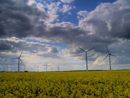 wind power plants in canola field with dark clouds photo