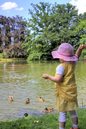 little girl feeding ducks at a lake in summer photo