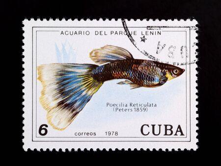 poecilia reticulata: Poecilia reticulata on old canceled cuban postage stamp commemorating lenin parl aquarium