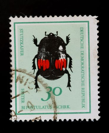 german democratic republic - CIRCA 1980: green tiger beetle on old canceled postage stamp photo