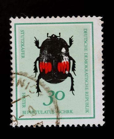 tiger beetle: Repubblica Democratica Tedesca - CIRCA 1980: coleottero tigre verde sul vecchio francobollo annullato Archivio Fotografico