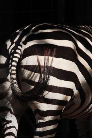 zebra back and dark background, slight motion blur on tail photo