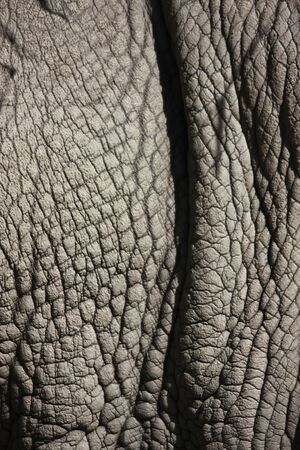 detail photo of a rhinos thick gray skin Stock Photo