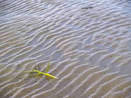plant part on the sand at low tide photo