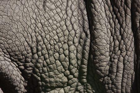 nashorn: Detail Foto eines Nash�rner dicke graue Haut Lizenzfreie Bilder