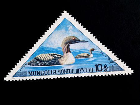 gavia: MONGOLIA - CIRCA 1973: gavia arctica on old canceled blue postage stamp in Mongolia circa 1973
