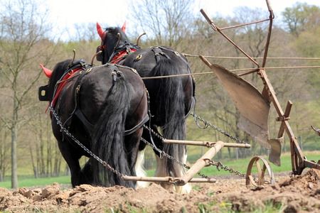 horses pulling a plough