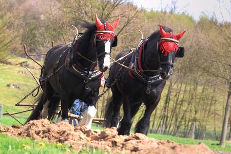 plough: horses pulling a plough