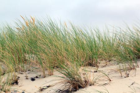 grass on coastal dune  Stock Photo