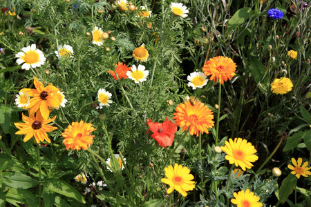 many different flowers on a summer meadow