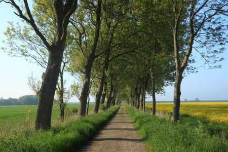 old alley in northern germany