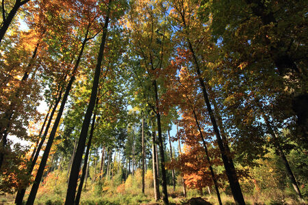 sun shining in an autumnal forest