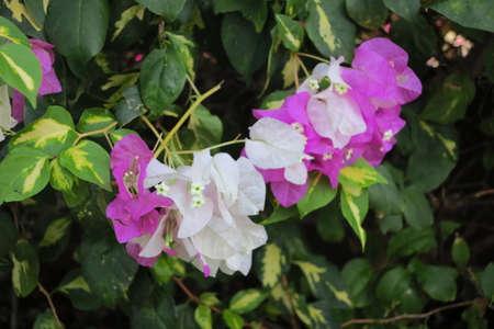 curacao: flower curacao 1
