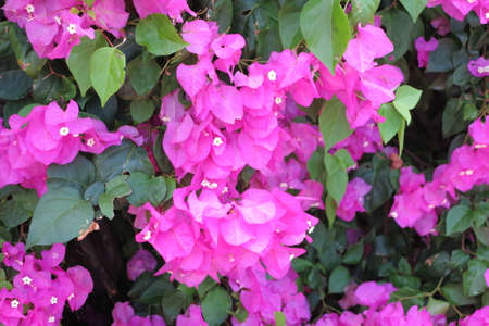 curacao: flower curacao 2
