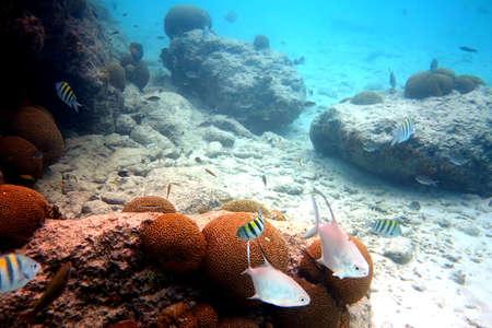 curacao: snorkel curacao 4
