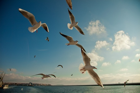 bird flying: seagull following passenger ship Stock Photo