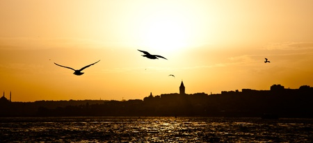 Silhouette Galata Tower and Seagull 免版税图像