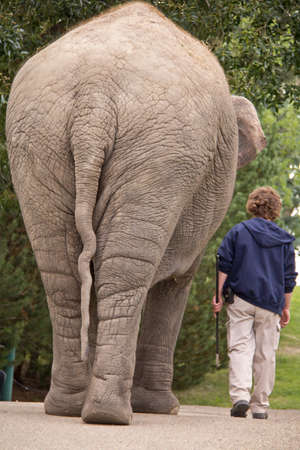 A young man walking side by side with a small elephant