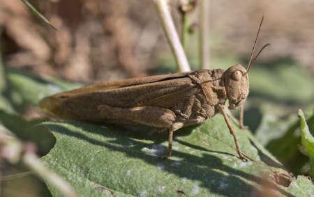 A closeup shot of a grasshopper photo
