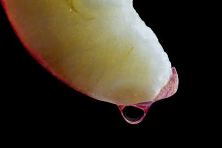 Water drop on a slice of an apple with a black background.
