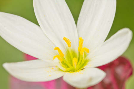 An extreme closeup shot of a beautiful white flower with yellow pollen
